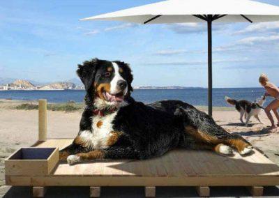 Alicante doggy beach 2